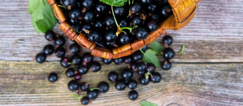 8 самых полезных ягод 1
